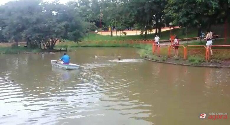 Homem salva cachorrinho de afogamento no lago do Parque Bicão; veja vídeo -