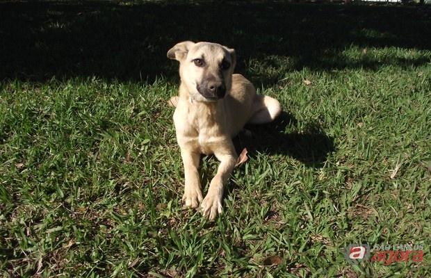 Canil municipal oferece castração gratuita de cães e gatos para população carente -