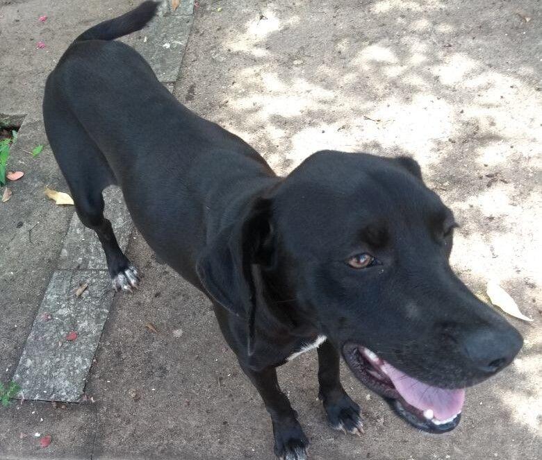 Cachorra é abandonada no Jardim Cardinalli - Crédito: Divulgação