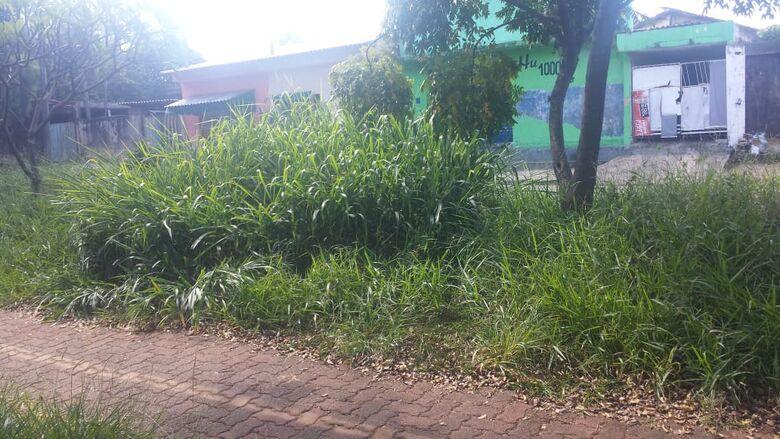 Matagal toma conta do Parque Linear: abandono municipal - Crédito: Divulgação