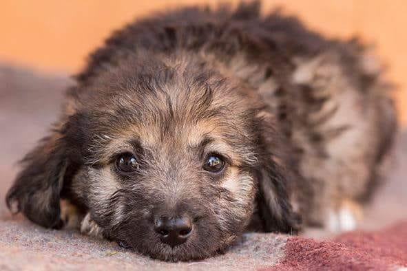 Filhotes e cães adultos poderão ser adotados neste domingo - Crédito: Divulgação