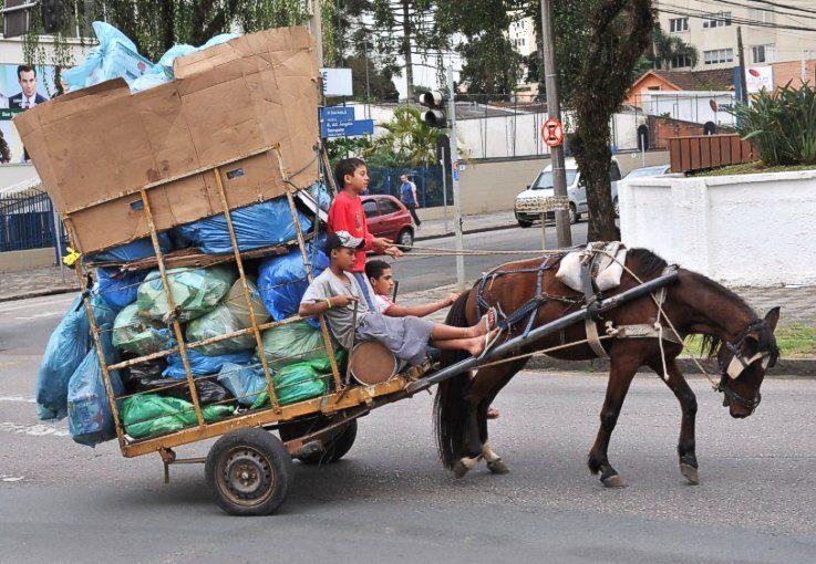Projeto de lei de Paraná Filho proíbe o uso de veículos de tração animal no perímetro urbano de São Carlos -