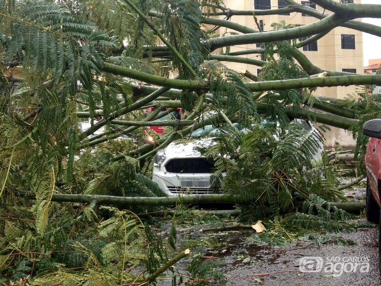 Árvore cai sobre carro em movimento e motorista fica preso no veículo - Crédito: Luciano Lopes