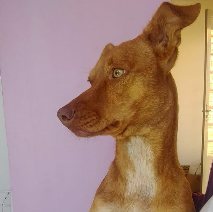 Cachorrinha desaparece no Jardim Zavaglia - Crédito: Divulgação