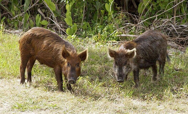 Projeto de Lei que proíbe a caça no Estado de SP é sancionado - Crédito: Divulgação