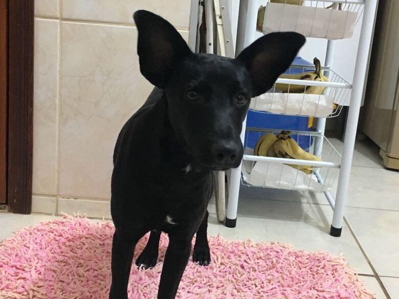 Cachorrinho é resgatado na Avenida São Carlos - Crédito: Divulgação