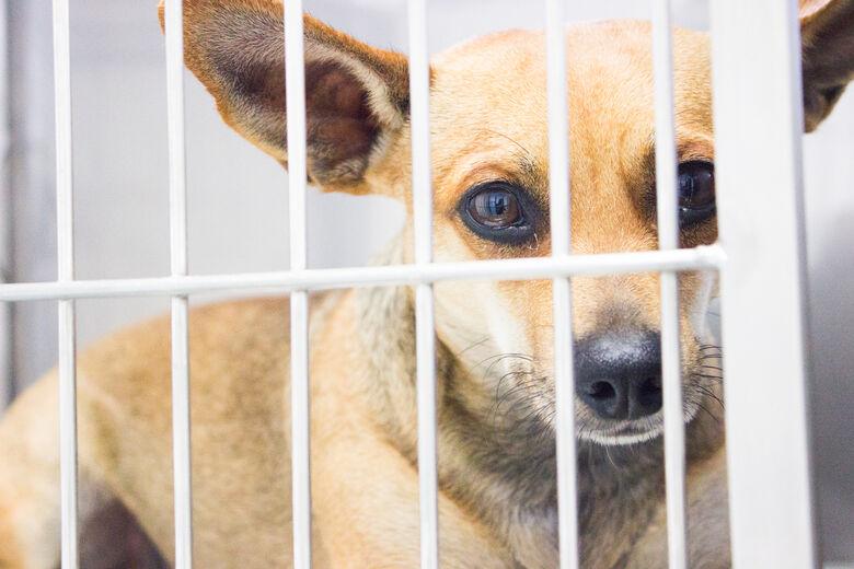 ONG ASA, Amigos Salvando Amigos, realizará castração gratuita de animais no HVU da UNICEP -