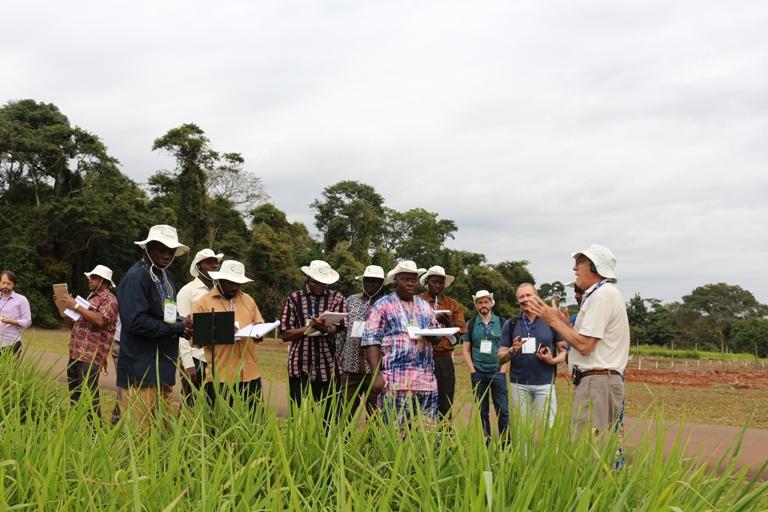 No campo, conhecendo as variedades de pastagem - Crédito: Laura Souza Pereira