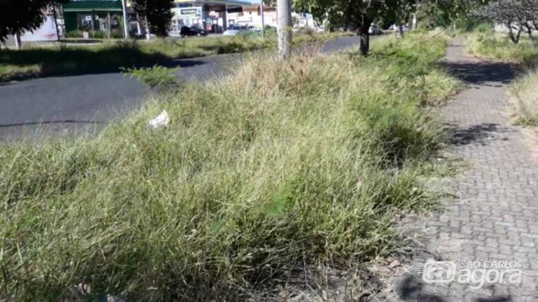 Sérgio Rocha aponta necessidade urgente de limpeza da praça Nikolas Chicrala, no Santa Felícia - Crédito: Divulgação