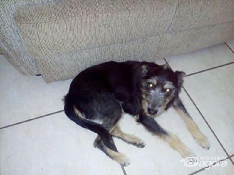 Cachorra Leleca está desaparecida -