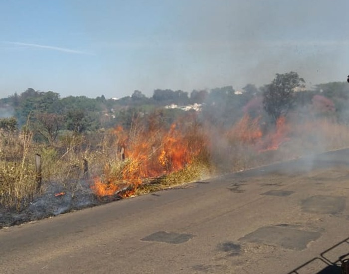 Incêndio queima 50 mudas de árvores nativas em São Carlos - Crédito: Colaborador/SCA