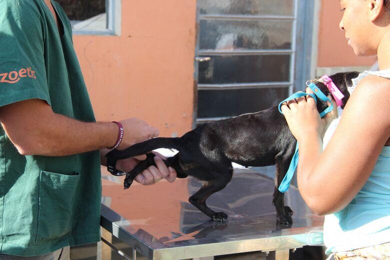 Mutirão realiza a castração gratuita de 100 animais em São Carlos e Ibaté - Crédito: Marcelo Damasceno e Cristiano Marques