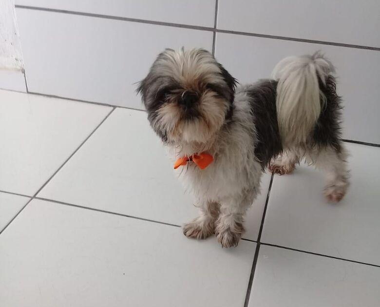 Cãozinho é resgatado na região do Astolpho Luís do Prado - Crédito: Divulgação