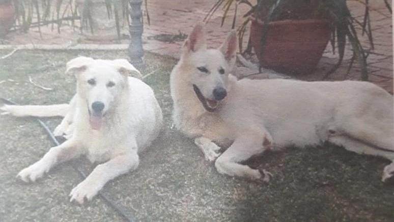Mulher entra em residência e se apodera de cães sem autorização - Crédito: Divulgação