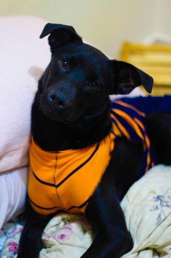 Feira de adoção de cães acontece neste sábado - Crédito: Divulgação