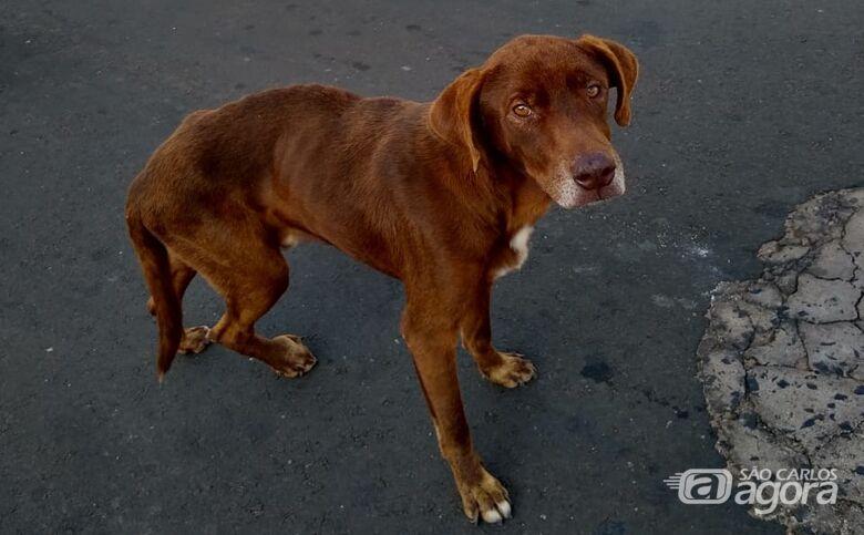 Franjinha precisa de ajuda; cachorrinho tem tumor em uma das patinhas - Crédito: Divulgação