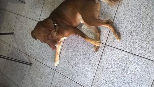 Cachorro é encontrado no Santa Felícia -