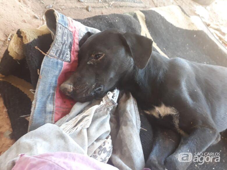 Abandonado em um saco plástico amarrado: João esteve próximo da morte no Aracy - Crédito: Divulgação