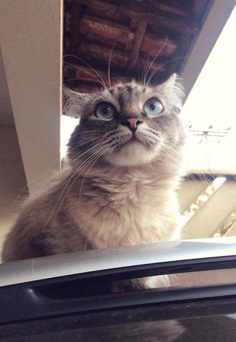 Gato está desaparecido -