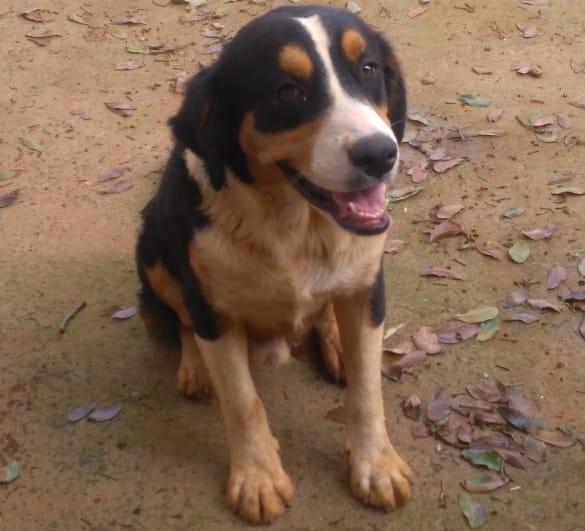 Cãozinho abandonado procura um novo lar - Crédito: Divulgação