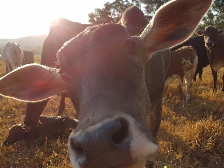 Ativistas pelos Direitos Animais irão se manifestar contra leilão da Prefeitura - Crédito: Divulgação