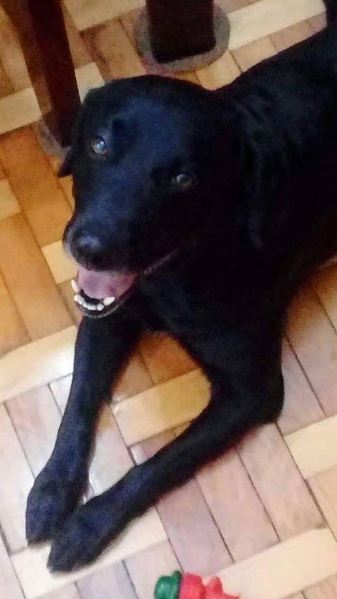 Cachorro Ventania está desaparecido (encontrado) -