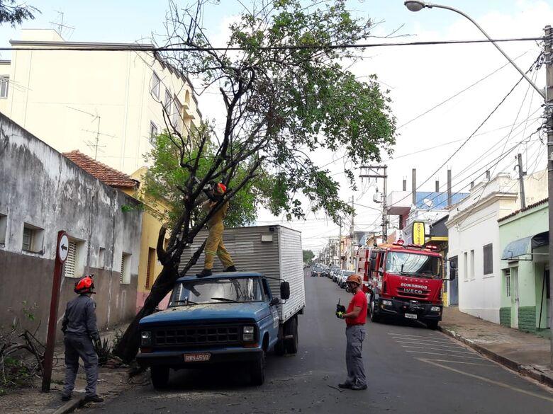 Caminhão fica 'enroscado' em galho de árvore no centro - Crédito: Maycon Maximino