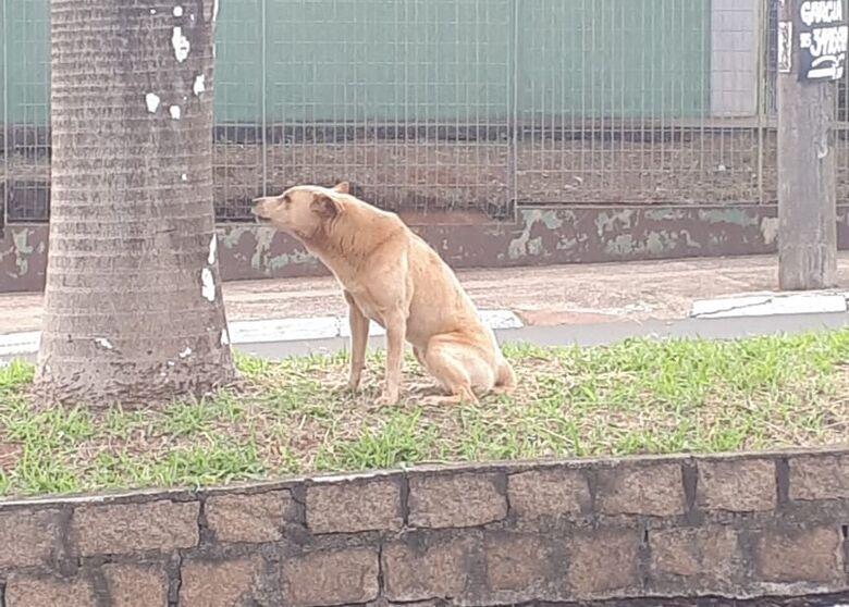 Cão está perdido na região do Centro de Especialidades - Crédito: Divulgação