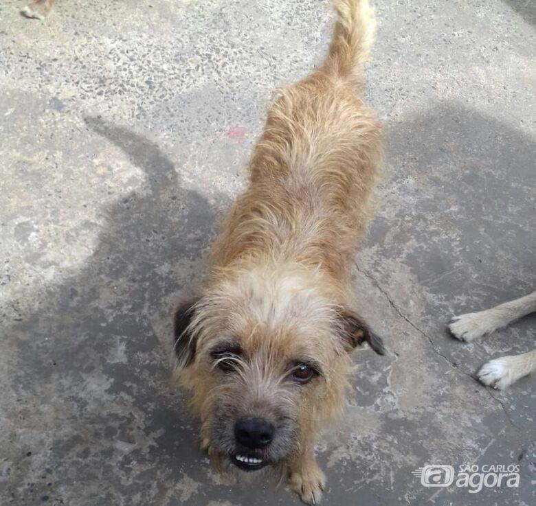Cachorro foge na região do Jardim Tangará - Crédito: Divulgação