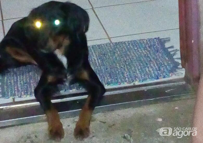 Dara desaparece e proprietária está desesperada em busca de informações - Crédito: Divulgação