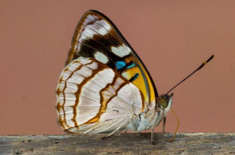 Exposição fotográfica na USP mostra a importância dos insetos na natureza - Crédito: André Rangel Nascimento