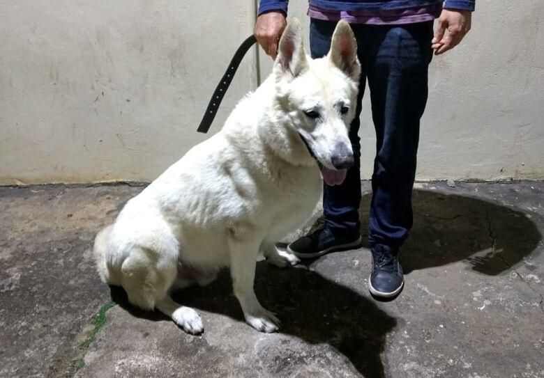 PM recupera cachorro que foi furtado na Vila Elisabeth - Crédito: Divulgação/PM