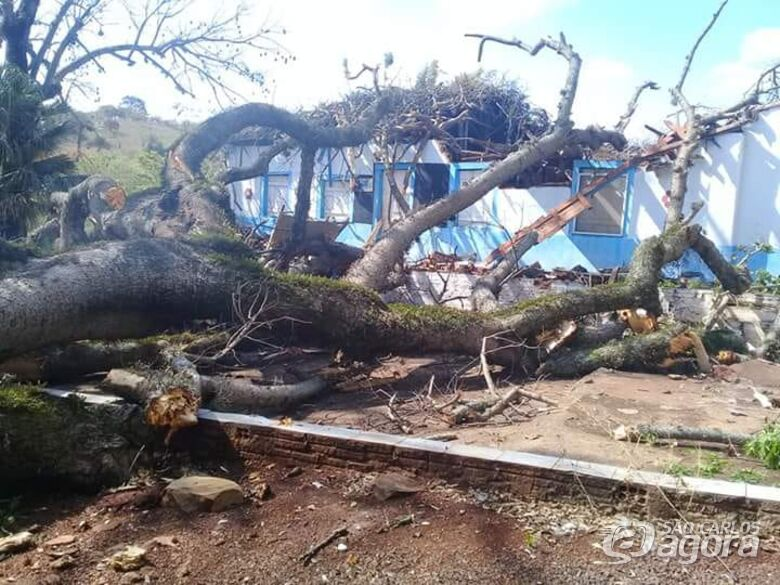Árvore de grande porte cai sobre bar na área rural - Crédito: Colaborador