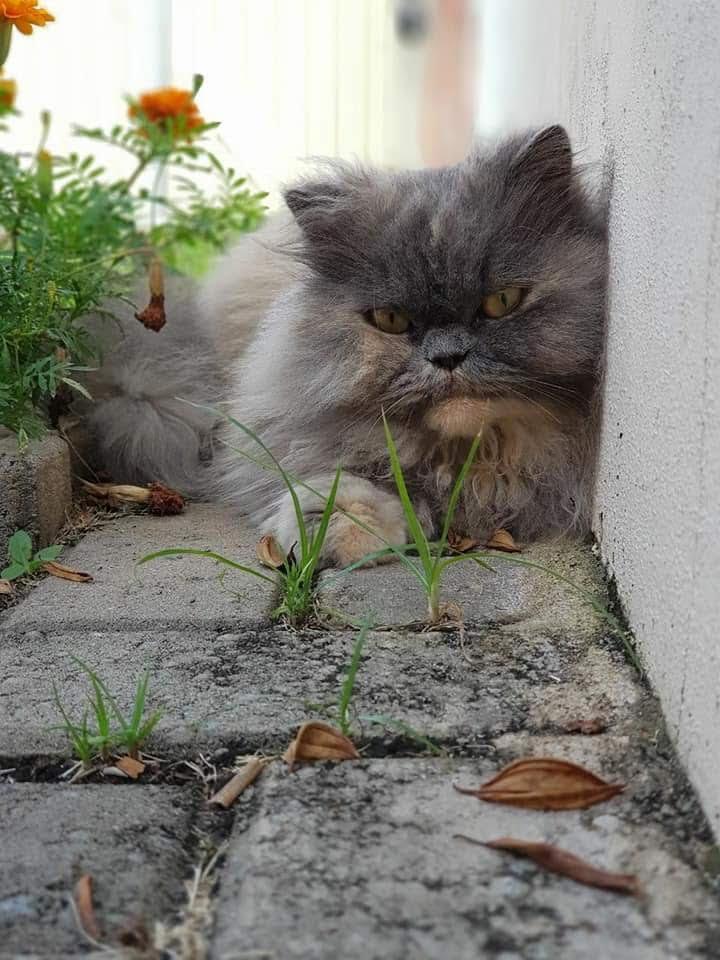 Gata está desaparecida -