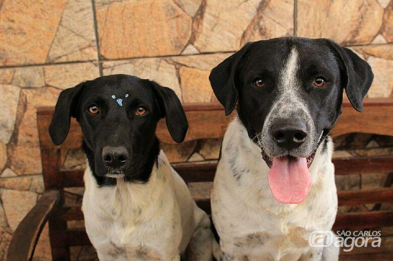 Feirinha de Adoção quer encontrar novos lares para fieis amigos - Crédito: Divulgação