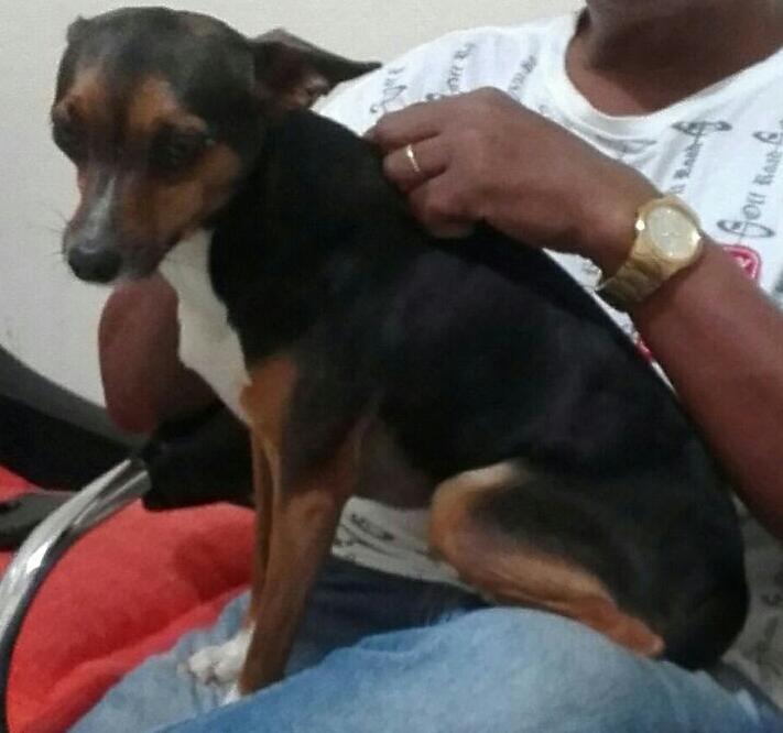 Cachorra Luma está desaparecida -