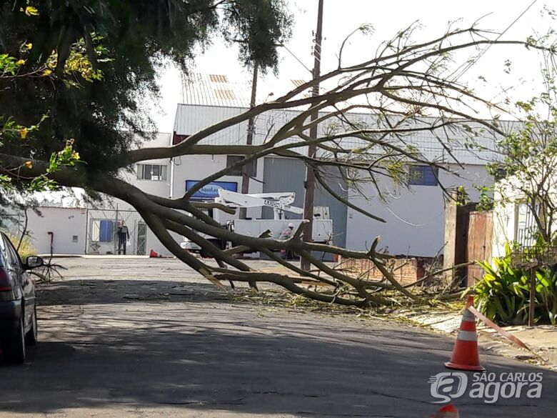 Queda de árvore interrompe fornecimento de energia elétrica - Crédito: Maycon Maximino
