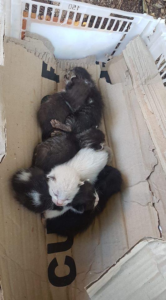 Gatinhos são resgatados e necessitam de ajuda - Crédito: Divulgação