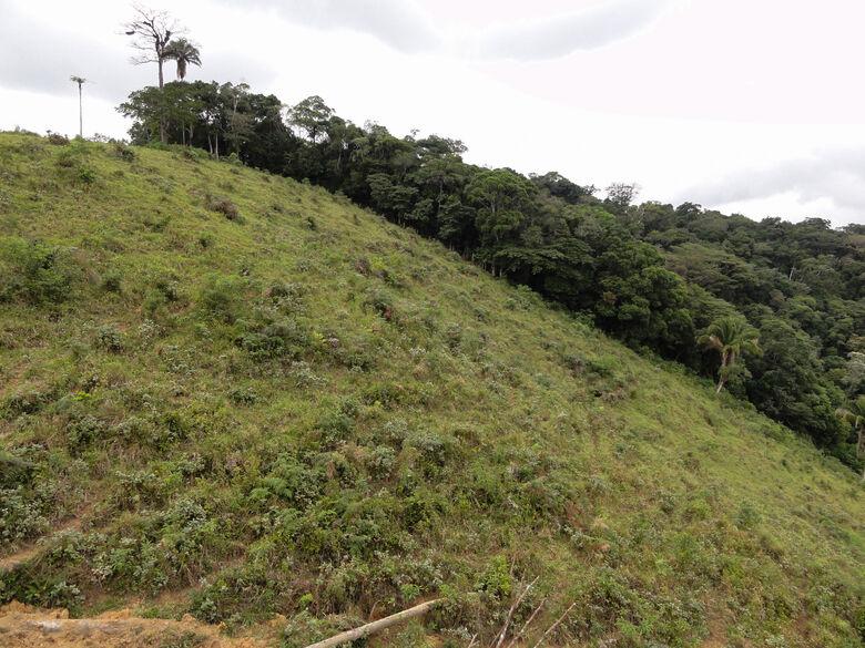 Pastagem com sinal de regeneração natural em proximidade de remanescente florestal - Crédito: Paulo Molin