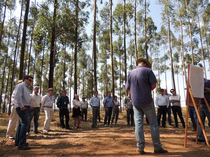 Visitantes conheceram o sistema integrado de produção com árvores - Crédito: Ana Maio