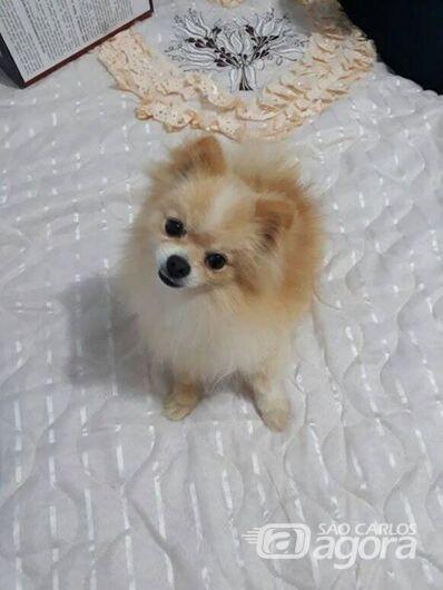 Cachorro está desaparecido no Balneário 29 -
