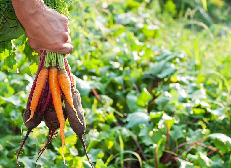 Começa no sábado a 2ª Semana da Agricultura Orgânica de São Carlos - Crédito: Imagem Ilustrativa