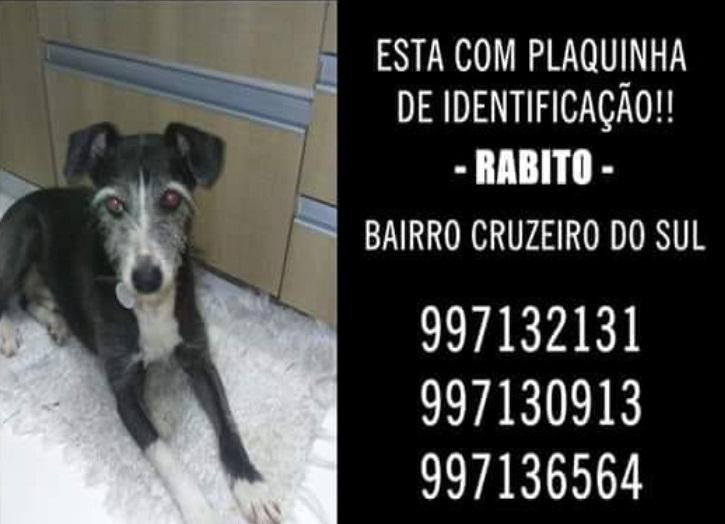 Utilidade-pública: cachorro Rabito está desaparecido -