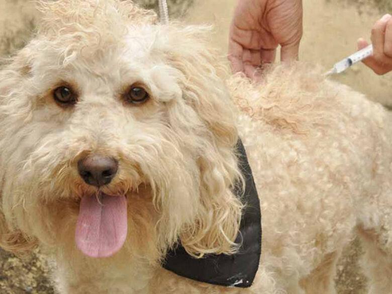 Sábado é dia de levar cães e gatos para vacinar contra a raiva animal - Crédito: Divulgação