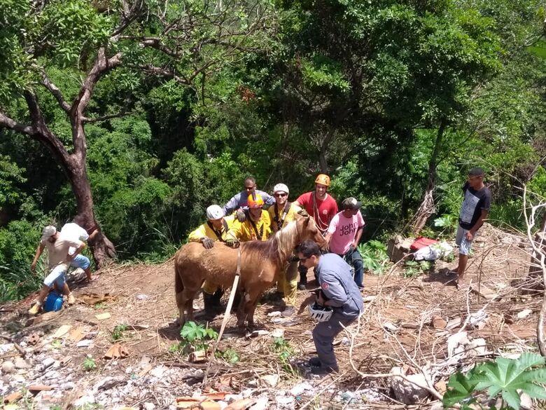 Bombeiros resgatam cavalo que caiu em buraco - Crédito: Colaborador/SCA