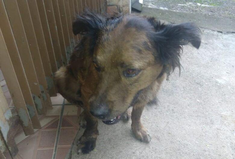 Cachorrinho perdido chora e procura por seu dono - Crédito: Divulgação