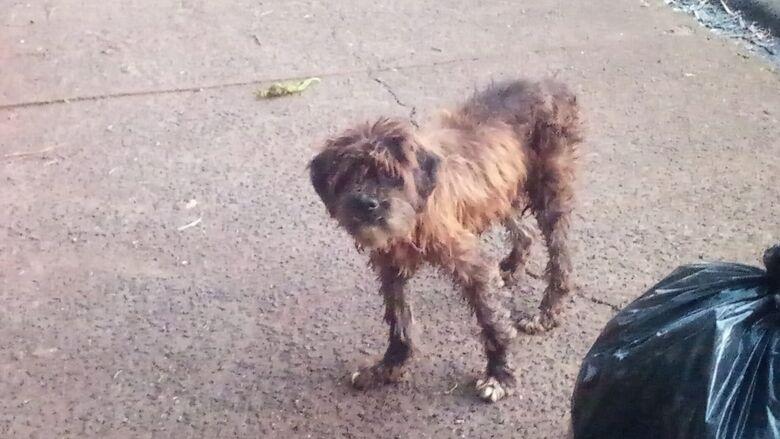 Cãozinho assustado está perdido no Jardim Bicão - Crédito: Divulgação