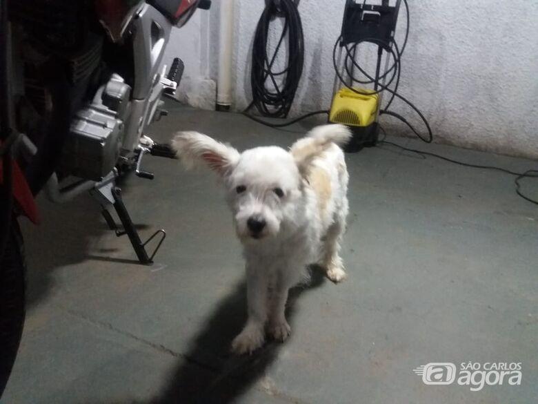 Cachorrinho é resgatado no Boa Vista - Crédito: Divulgação