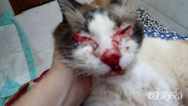 Protetora cuida aproximadamente 180 gatos e pede auxílio para os anjos em quatro patas - Crédito: Divulgação