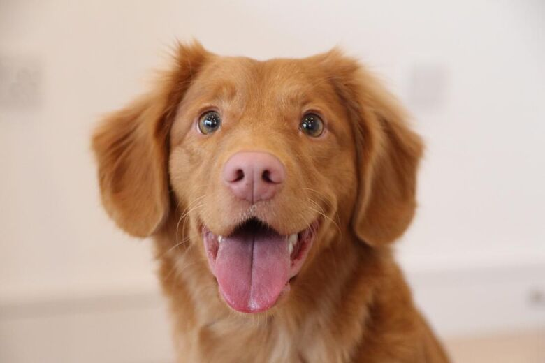 Pacientes da Unimed São Carlos poderão receber visita de animais de estimação - Crédito: Divulgação